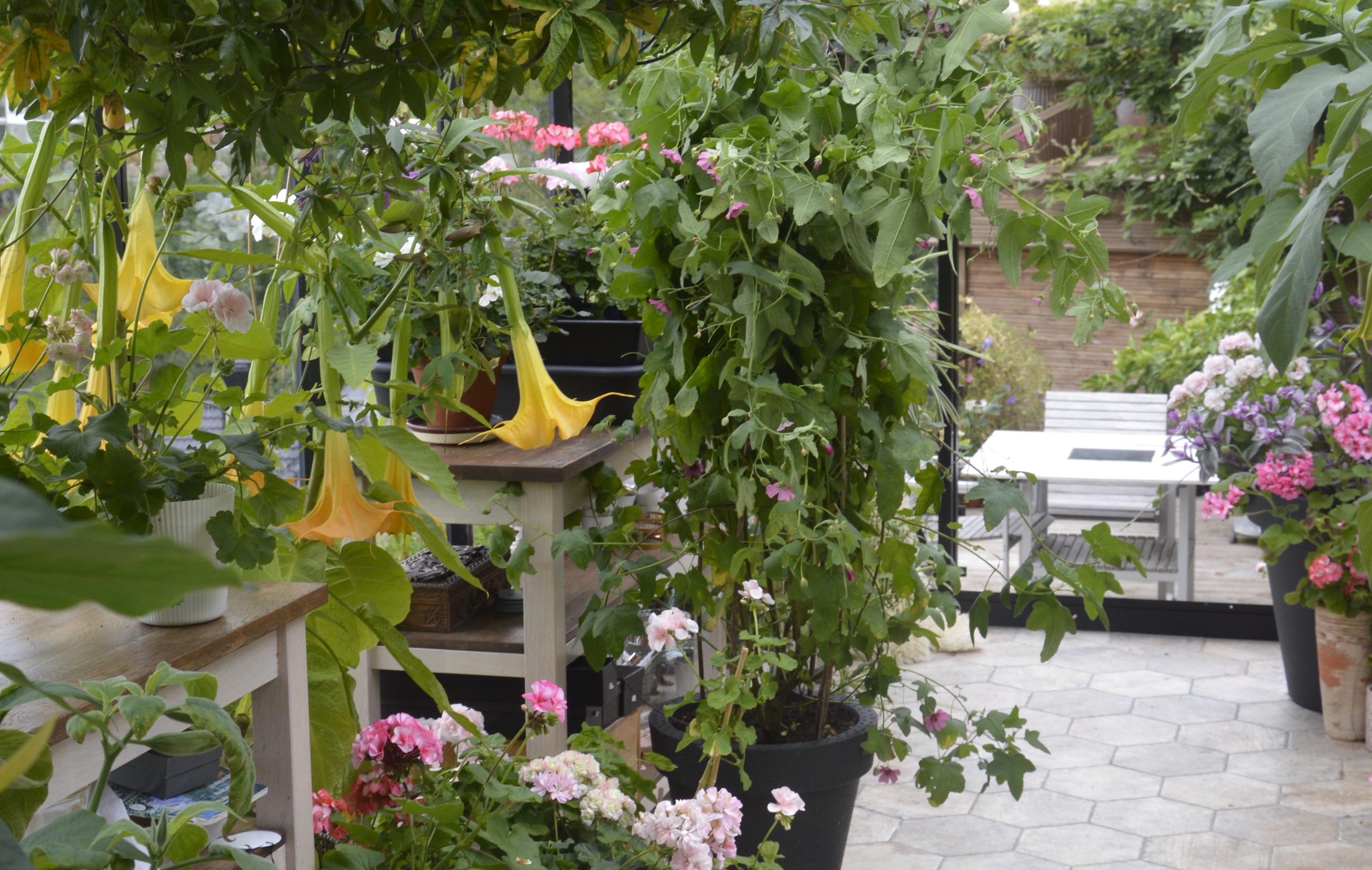 I et drivhus kan du se at det spirer og gror! Foto: Grønt Fokus